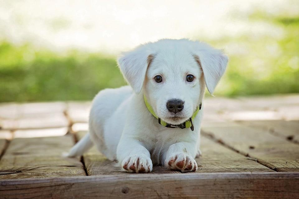 Financer vos frais vétérinaires avec l'assurance pour chien