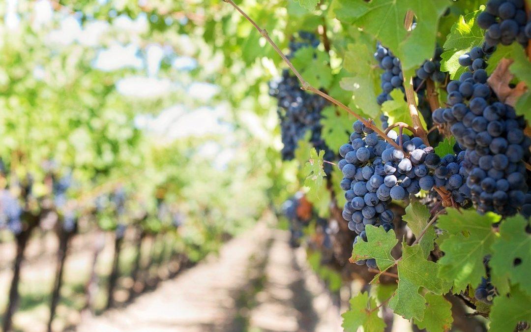 Comment fonctionne l'achat/vente de propriétés viticoles?